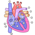 Diagram of the human heart (multilingual).png